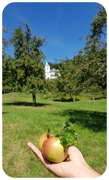 jablko_jurko