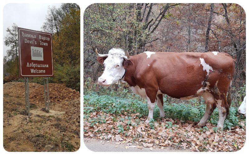 diablovo_mesto_krava