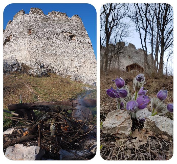 kvet_hradby