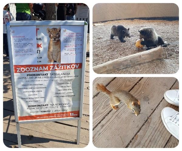 zoo_vevericka