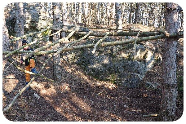 drevo_strom