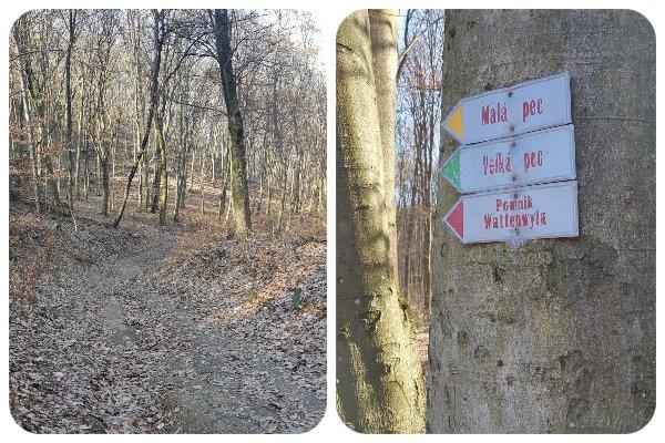 lesna_cesta