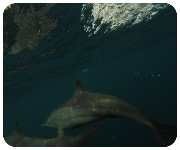ocean_delfin_pod_vodou