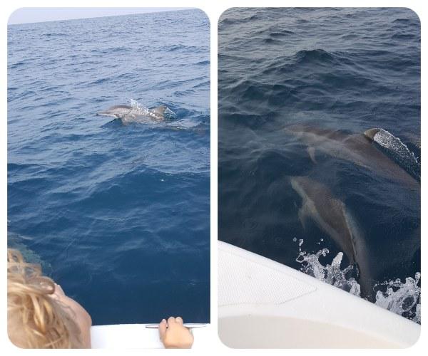 delfin_ocean