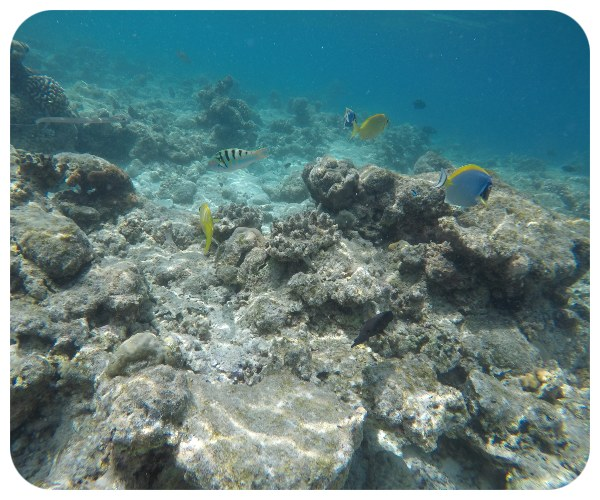 pod_oceanom_ryby