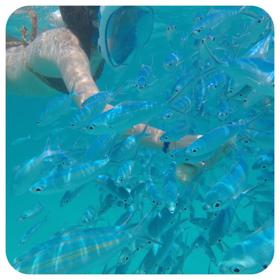 maldivy_ryby_krmenie