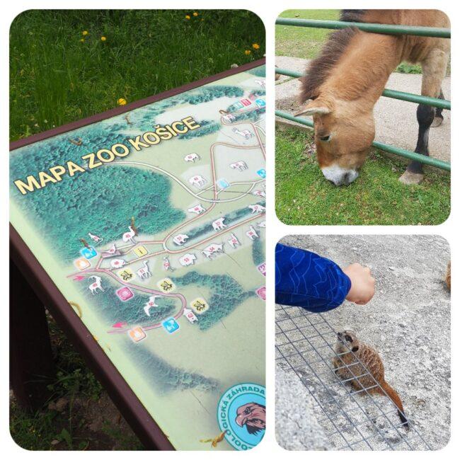 mapa_zoo_zvieratka