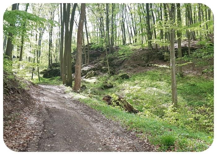 cesta_lesom