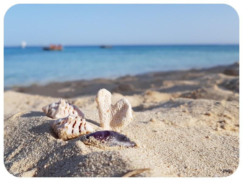 koral_more_musle