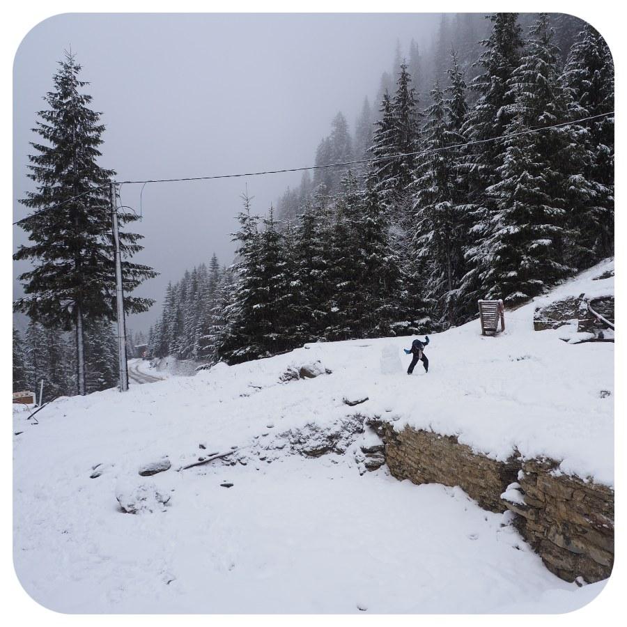 sneh_les