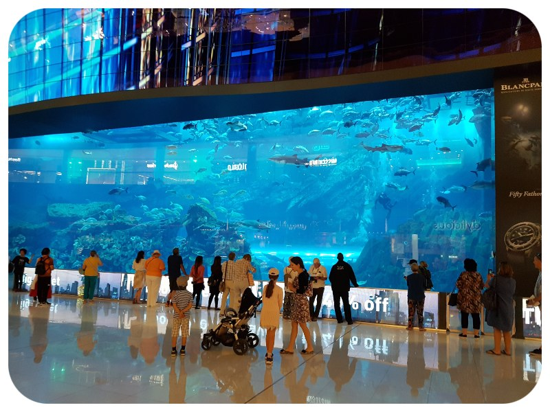 akvarium_vstup